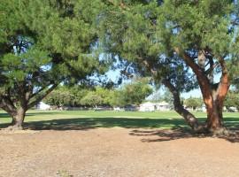 facility_grass